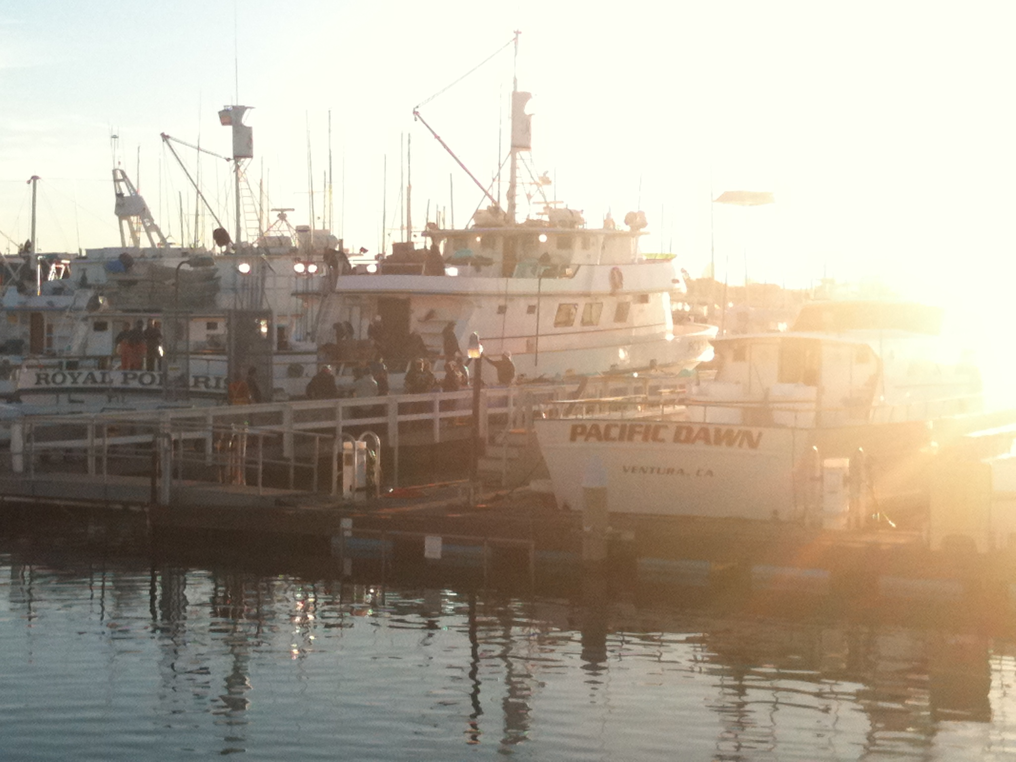 Socalsalty trip report daily double in sd for Point loma landing fish count